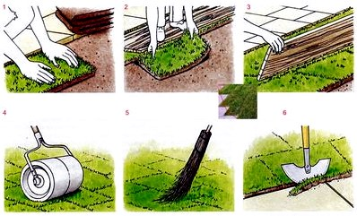 Укладка газона в рулонах: как уложить рулонный газон своими руками