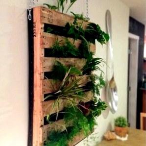Вертикальный сад своими руками в квартире или доме